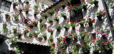 Córdoba. Festival de las flores